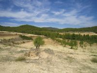Finca in a Protected Area of 72 Hectares with Hunting Area, near Town of Bullas, Murcia